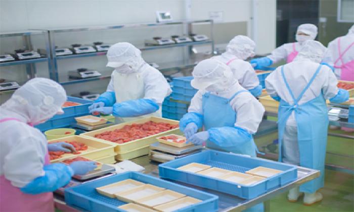日本の食の安全を守る食品工場の衛生的なユニフォーム