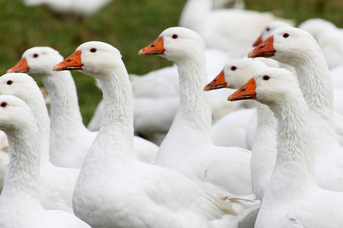 知っておトク羽毛産地と生地品質別でみる良い羽毛布団の選び方