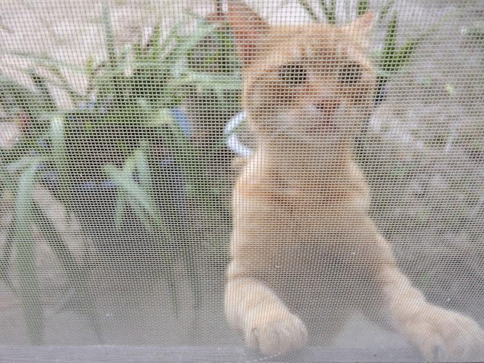 梅雨時期だから注意したい・窓と網戸のカビ対策と掃除の方法