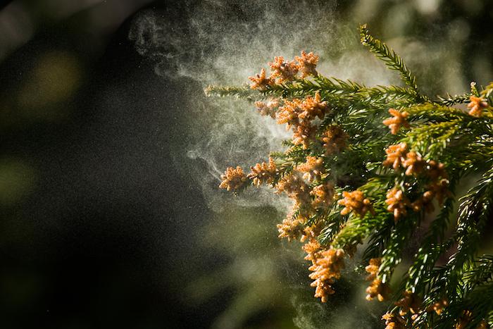 衣類へのスギ花粉の付着を大幅に防ぐ花粉ガードスプレーの作り方