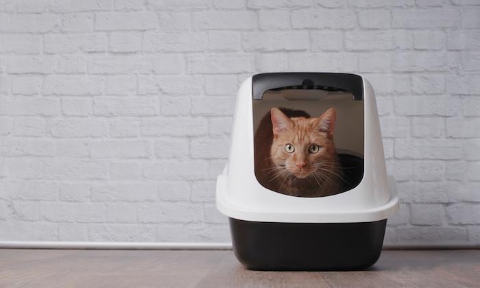 ペット愛好家必見!猫のにおいが消えないお悩み解決します